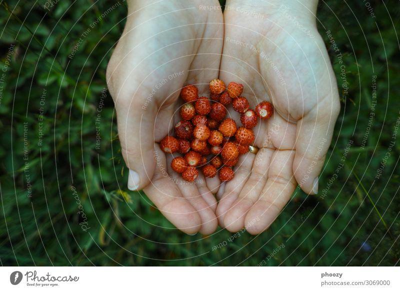 Rot-Grün Sommer Wildpflanze Wald schön klein rot Abenteuer Farbfoto Vogelperspektive