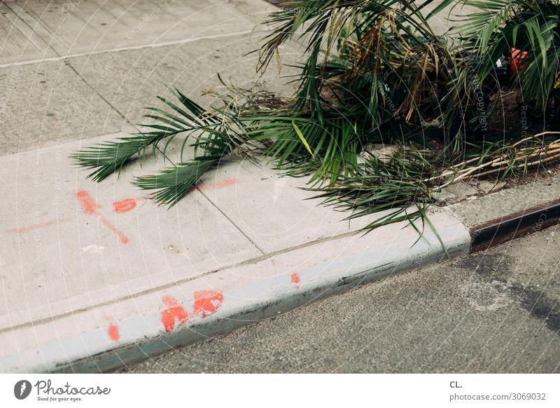 grau grün rot Pflanze Verkehrswege Straße Wege & Pfade Asphalt Boden Müll Stadt Farbe Missgeschick skurril Farbfoto Außenaufnahme Menschenleer