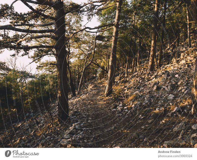 Waldweg Abenteuer Expedition Berge u. Gebirge wandern Klettern Bergsteigen Baum Stein erleben Ferien & Urlaub & Reisen Farbfoto Gedeckte Farben Außenaufnahme