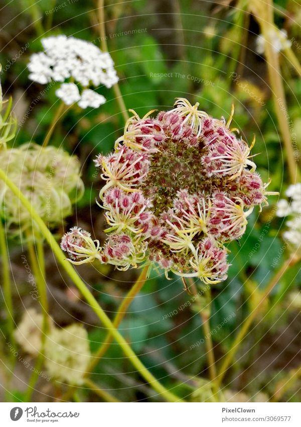 Blüte Ferien & Urlaub & Reisen Tourismus Sommerurlaub Natur Pflanze Blume Grünpflanze Garten Park Wiese Feld Blühend Wachstum schön grün Stimmung