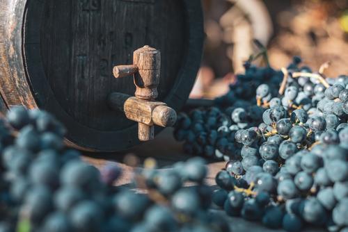 Weinfass mit blauen Cabernet-Trauben in der Erntezeit alt Landwirtschaft Ackerbau Alkohol Lauf Eichenfass Getränk in Flaschen abgefüllt Cabernet Franc Fass
