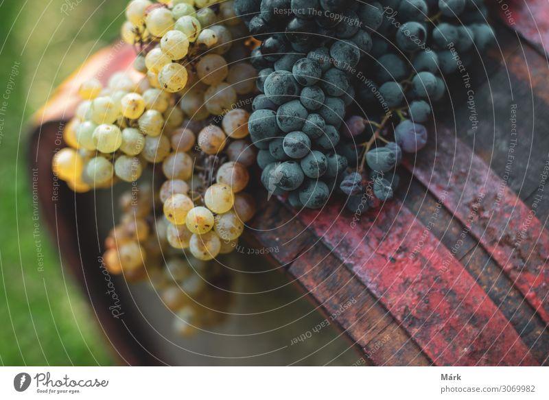 Blaue und weiße Trauben auf dem gealterten Weinfass im Weinberg. Lebensmittel Frucht Dessert Getränk Alkohol Gesunde Ernährung Landwirtschaft Forstwirtschaft