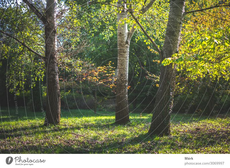 Herbstbäume im Garten mit Sonnenlicht Ferien & Urlaub & Reisen Natur Landschaft Baum Blatt Park Wald natürlich gelb gold friedlich Ungarn Oktober Szene
