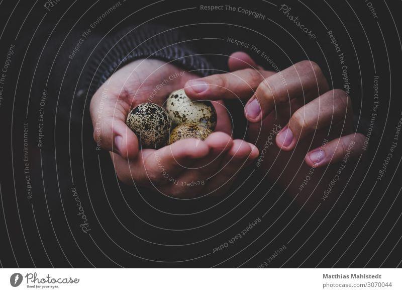 Wachteleier in der Hand Junge Frau Jugendliche Finger 1 Mensch 18-30 Jahre Erwachsene Umwelt berühren entdecken festhalten außergewöhnlich nachhaltig natürlich