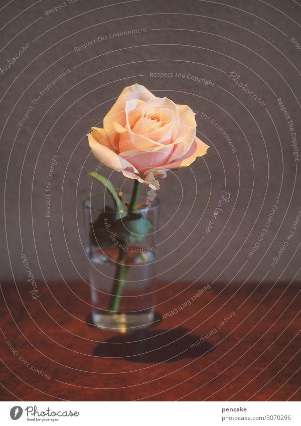 la vie en roses Blume Zeichen ästhetisch authentisch schön Klischee feminin orange rosa Leben Rose Bühnenbeleuchtung Innere Kraft Raum Wasserglas Farbfoto