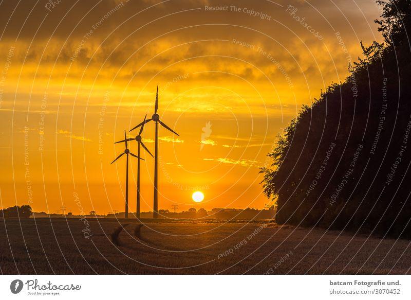 Kleiner Windpark im Sonnenuntergang hinter einem Getreidefeld Erneuerbare Energie Windkraftanlage Umwelt Landschaft Sommer Herbst Klimawandel Schönes Wetter