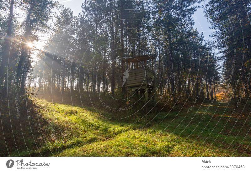 Herbstmorgens im Wald schön Tourismus Abenteuer Freiheit Sonne Natur Landschaft Pflanze Erde Sonnenaufgang Sonnenuntergang Sonnenlicht Nebel Baum Blatt