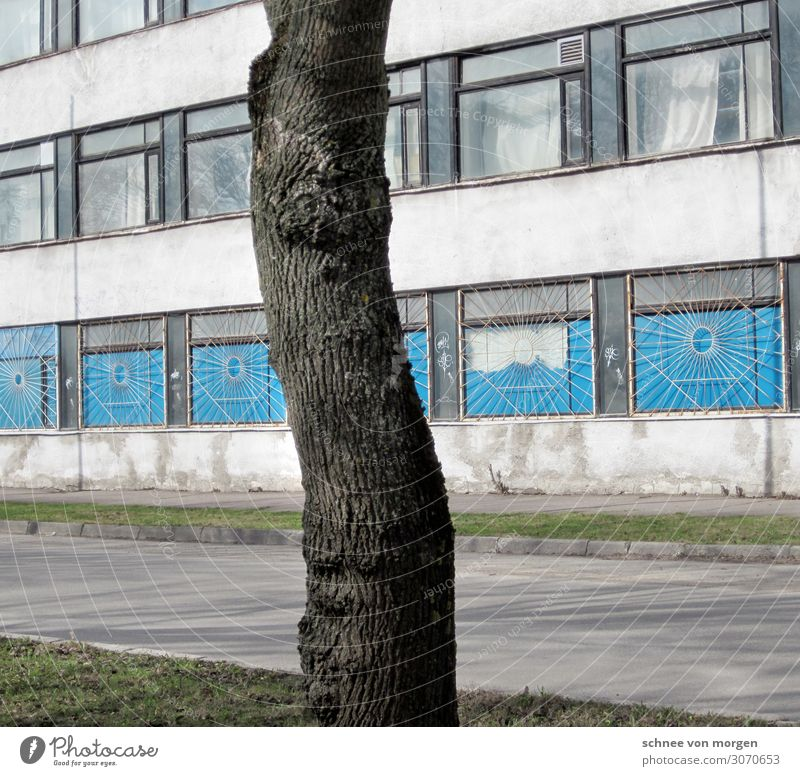 "Baum Stadtrand Haus Fassade Verkehrswege bizarr ""Osten Litauen Gebäude Baum"" Farbfoto Muster Abend"