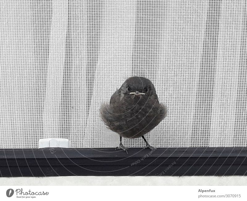 pieps Wildtier Vogel Tierjunges niedlich Glück Zufriedenheit Lebensfreude Frühlingsgefühle selbstbewußt Coolness Optimismus Kraft Willensstärke Mut Tatkraft
