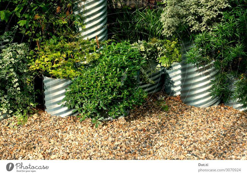 urban jungle Pflanze Sträucher Efeu Blatt Grünpflanze grün Pflanzkübel Gefäße Röhren bepflanzt üppig (Wuchs) Kies begrünen gärtnern Farbfoto Außenaufnahme