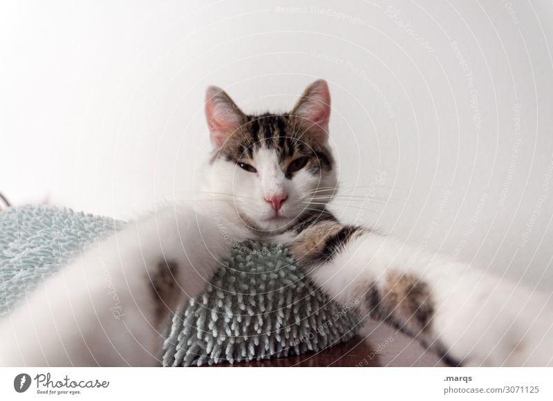 Selfie Katze Tier lustig außergewöhnlich Haustier Müdigkeit skurril