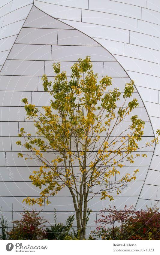 Herbst Umwelt Natur Pflanze Baum Garten Park Stadt Bauwerk Gebäude Architektur Fassade Ornament entdecken Kommunizieren ästhetisch außergewöhnlich elegant