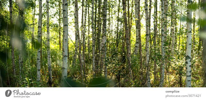 Sommer im Birkenwald in Finnland | Panorama Ferien & Urlaub & Reisen Natur Pflanze grün Landschaft Sonne Baum ruhig Wald Gesundheit Hintergrundbild Umwelt