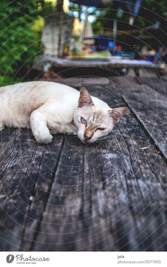katze Tisch Tier Haustier Katze 1 beobachten Erholung genießen schön kuschlig nah natürlich niedlich Stadt Holztisch Farbfoto Außenaufnahme Menschenleer Tag