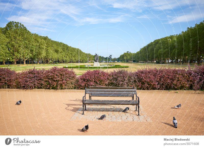 Eine leere Bank im Jasne Blonia Park in Szczecin. Natur Himmel Kleinstadt Stadt Taube Romantik Gelassenheit geduldig ruhig Einsamkeit Polen sonnig Europa
