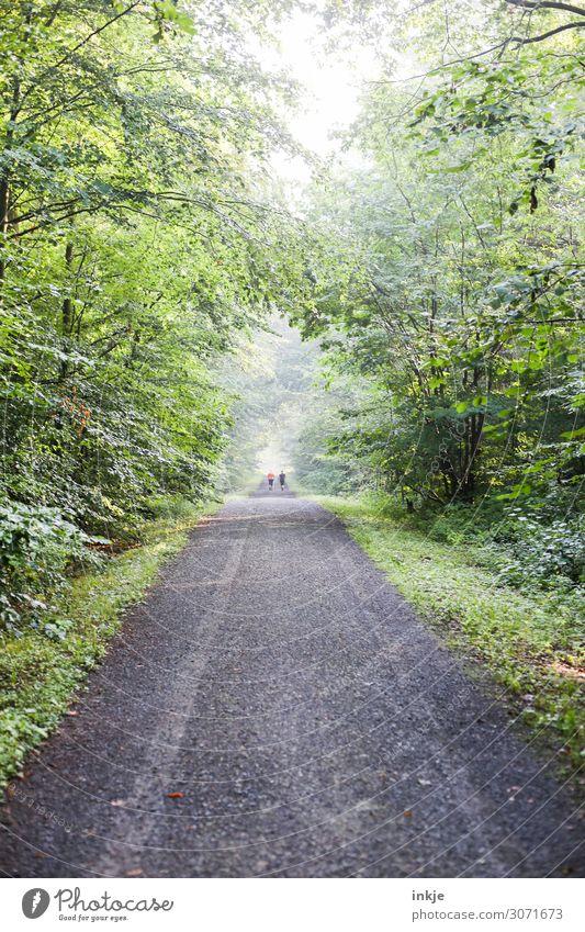 Walking im Park / nebulös Mensch Natur Sommer grün Baum Wald Gesundheit Erwachsene Leben Senior Frühling Bewegung hell frisch Nebel Luft