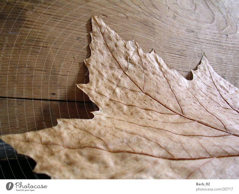 Blatt gegen Holz Blatt Herbst Holz Holzmehl