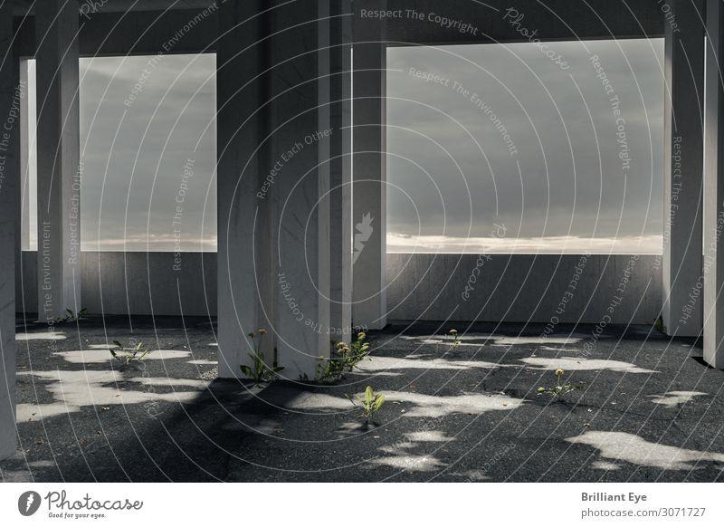 Parkhaus mal anders schlechtes Wetter Pflanze Wildpflanze Löwenzahn Gebäude Architektur Mauer Wand alt dunkel gruselig kalt Stadt Einsamkeit Endzeitstimmung