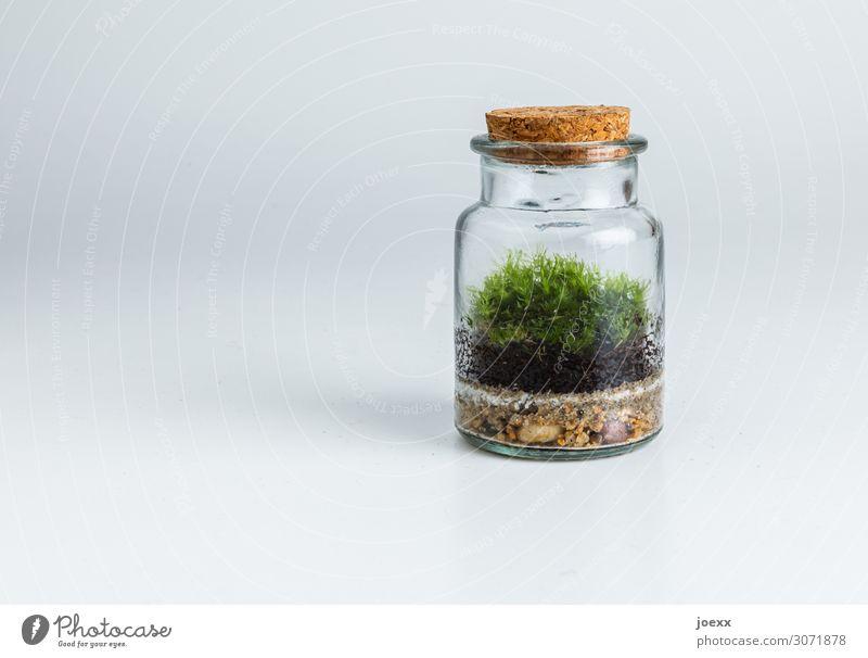 Grünanlage Moos Glas nachhaltig natürlich retro verrückt braun grau grün bizarr Endzeitstimmung Hoffnung Idee Handel Natur sparsam Korkdeckel Apothekerglas