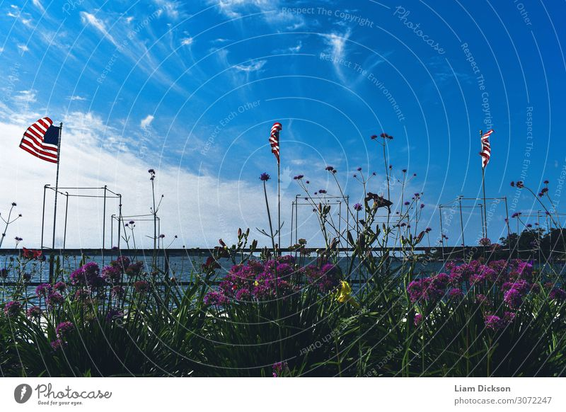 Flaggen und Blumen an der Atlantikküste Umwelt Natur Landschaft Pflanze Urelemente Erde Luft Wasser Himmel Wolken Horizont Sonnenlicht Sommer Klima Wetter