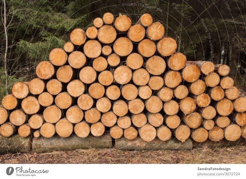 Stacked wooden trunks Getränk Wohnung Natur Klima Baum Wald Zufriedenheit natural texture timber stack lumber Material tree logging firewood pattern forest