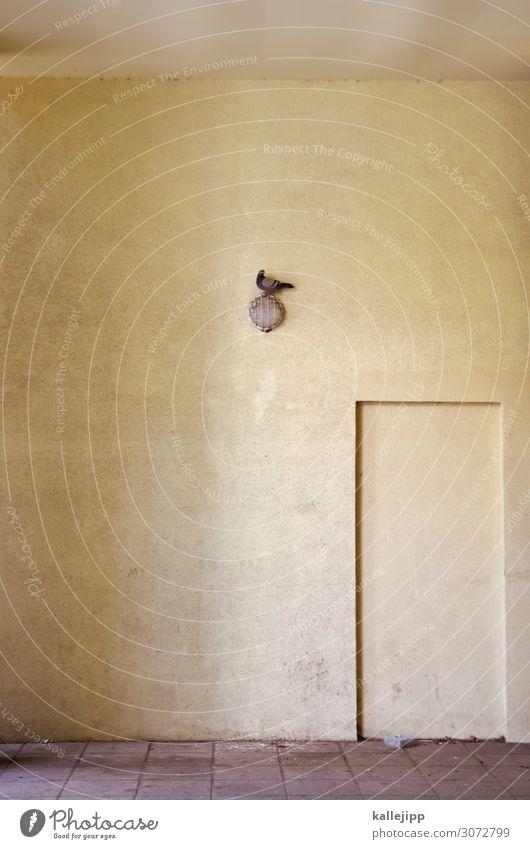 taubenei Stadt Haus Tier Lampe Vogel dreckig sitzen Eingang Taube minimalistisch Unterführung