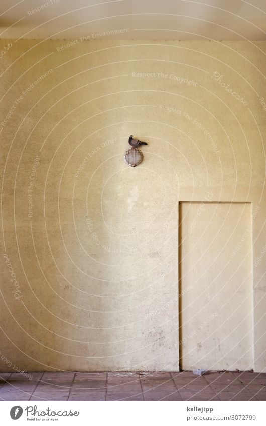 taubenei Stadt Tier Vogel Taube 1 sitzen Eingang Haus Unterführung minimalistisch Lampe dreckig Farbfoto Außenaufnahme Licht Schatten Kontrast