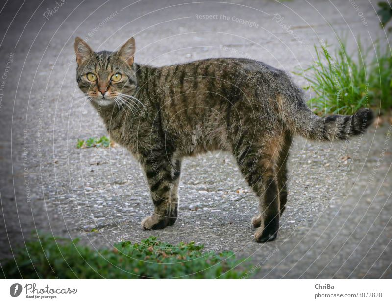 Kater Carlos Tier Haustier Katze Pfote 1 Beton Gefühle Glück Zufriedenheit Vertrauen Sympathie schön Gelassenheit Abenteuer ästhetisch elegant Hauskatze