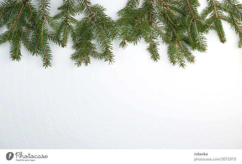 grüne Nadeläste auf weißem Hintergrund Design Winter Dekoration & Verzierung Feste & Feiern Weihnachten & Advent Silvester u. Neujahr Natur Pflanze Baum