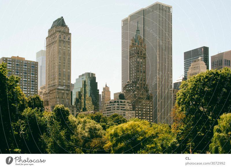 central park Umwelt Natur Wolkenloser Himmel Sommer Schönes Wetter Baum Park New York City Manhattan Central Park USA Stadt Stadtzentrum Menschenleer Hochhaus