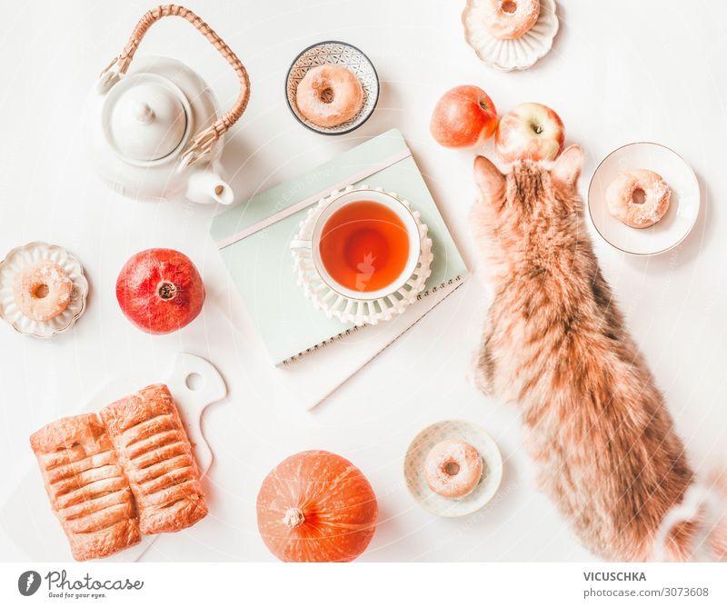 Herbst Stillleben mit Kürbis, Katze und Tee Lebensmittel Kuchen Ernährung Getränk Heißgetränk Lifestyle Häusliches Leben Tier Design Krapfen Hintergrundbild