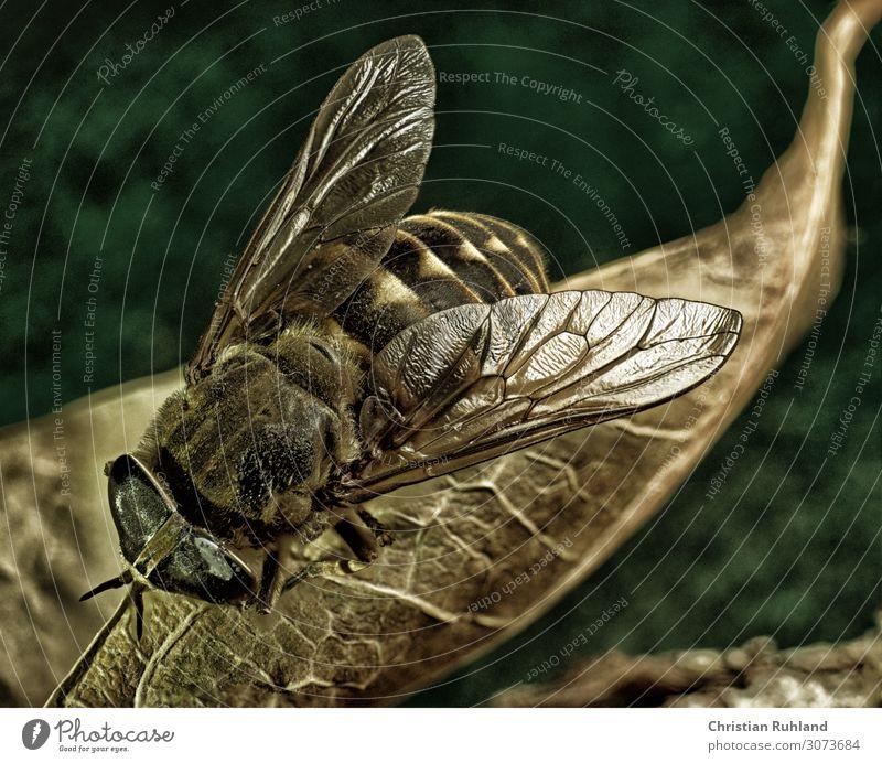 Eine Fliege auf einem Blatt 1 Tier hocken stehen ästhetisch nah natürlich grün orange friedlich ruhig authentisch Flugangst verstört elegant Kreativität