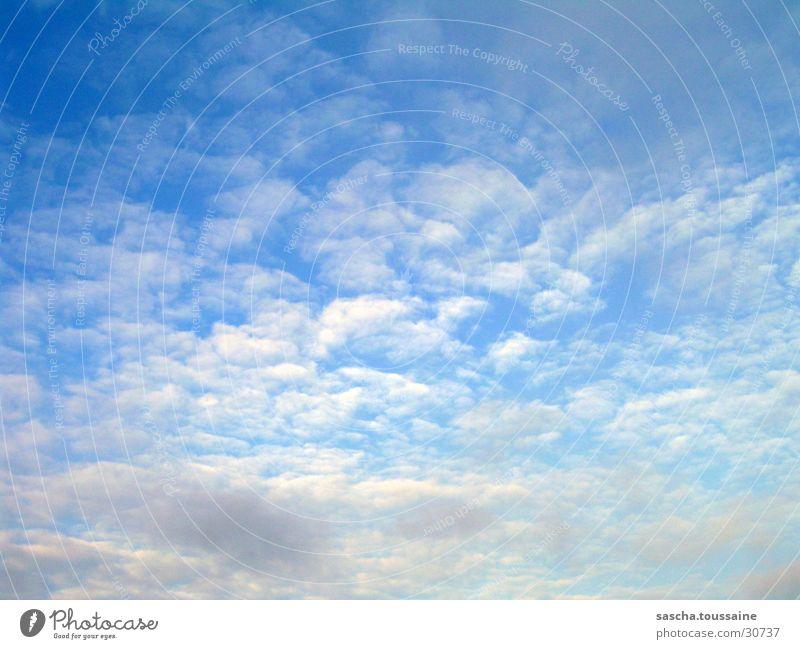 Schäfchen im Blauen... Natur schön Himmel weiß blau grau Wetter