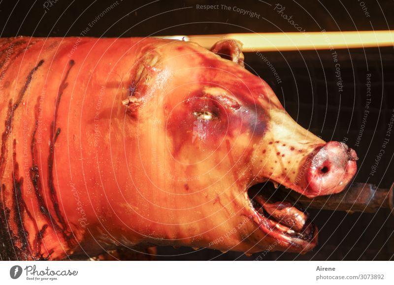 Schweinerei Fleisch Spanferkel Schweinefleisch Totes Tier 1 orange rosa rot Völlerei Schmerz Tabubruch grillen Tod Traurigkeit Schock Metzgerei Farbfoto