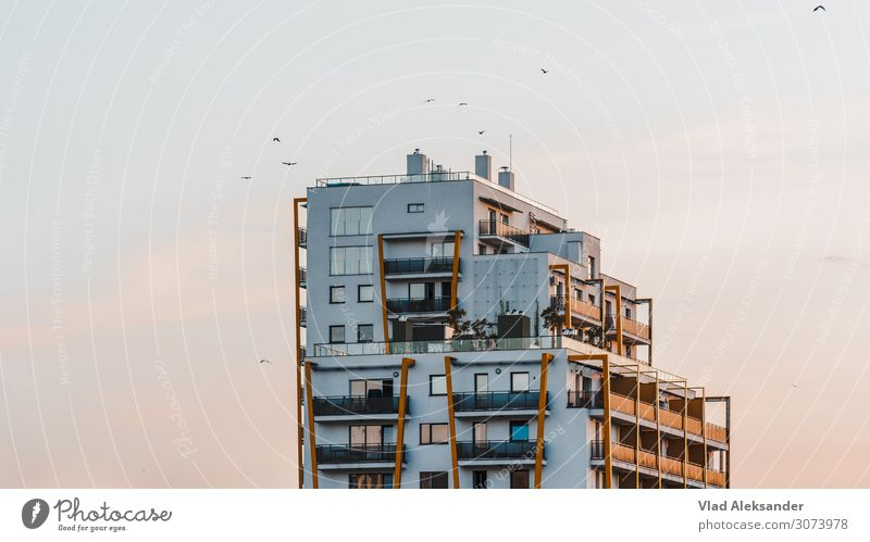 Sonnenuntergang mit Vögeln Umwelt Natur Landschaft Himmel Wolkenloser Himmel Sonnenaufgang Sommer Schönes Wetter Wärme Topfpflanze Kleinstadt Stadt Skyline
