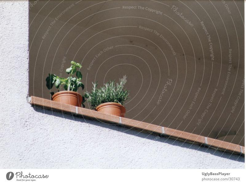 Pflanzen Pflanze Mauer Häusliches Leben Balkon Säule harmonisch Topf