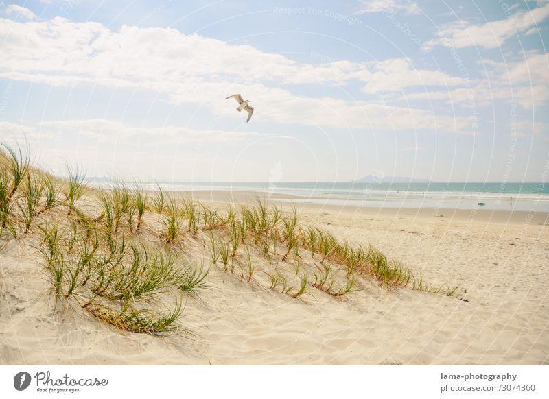 Sandstrand mit Düne und Möwe bei Sonnenschein Neuseeland Strand Stranddüne Badeurlaub Badewetter Meer Sommerurlaub Ferien & Urlaub & Reisen Erholung