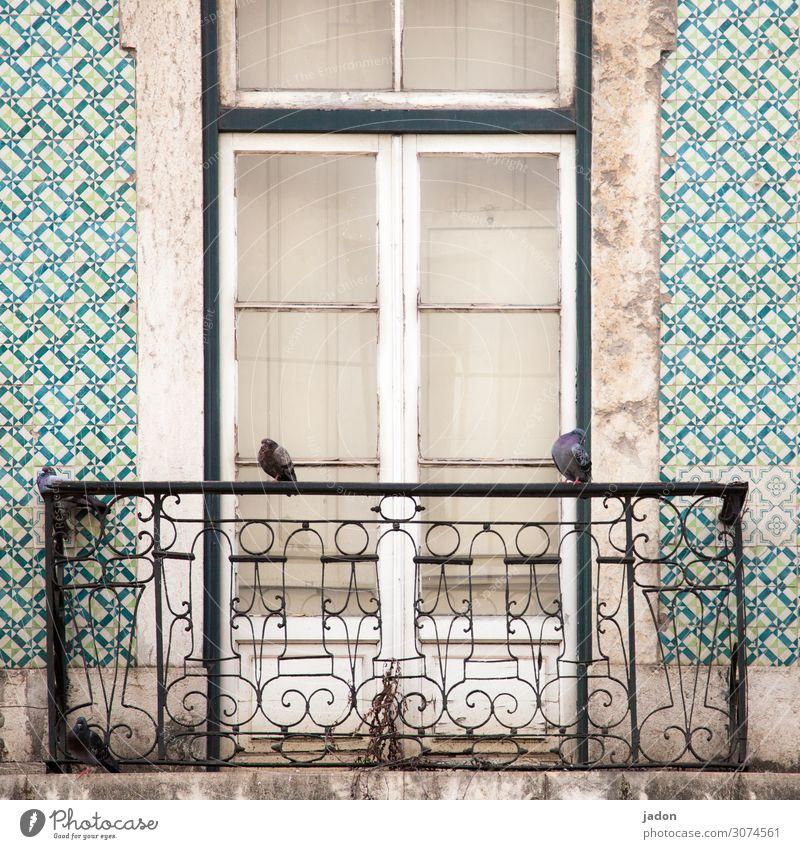 ausguck. Kunst Stadt Haus Traumhaus Hochsitz Mauer Wand Fassade Balkon Fenster Tür Vogel Taube 2 Tier hocken sitzen trist Trägheit Symmetrie Verfall
