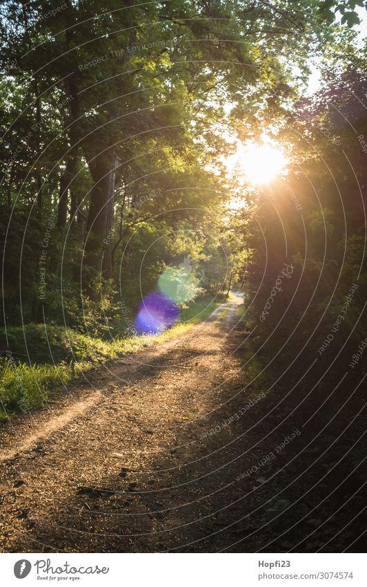 Weg im Gegenlicht Umwelt Natur Landschaft Pflanze Sonne Sonnenaufgang Sonnenuntergang Sonnenlicht Sommer Schönes Wetter Baum Sträucher Wald gebrauchen Erholung