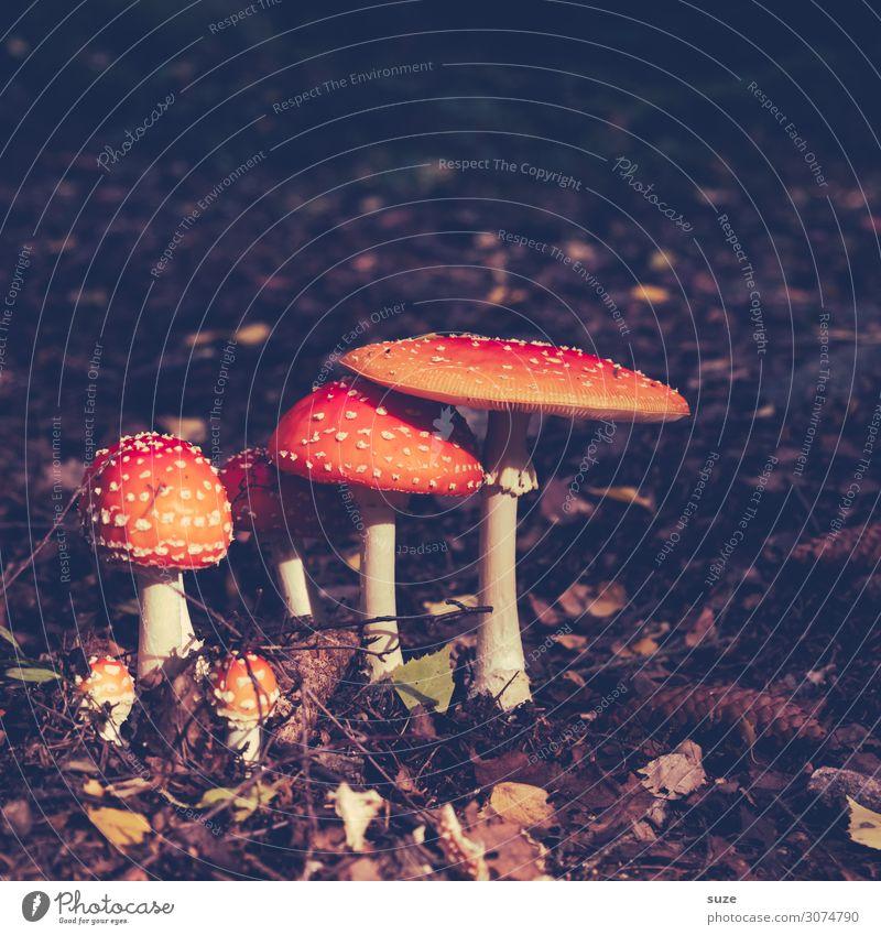 High Society Gesundheit Alternativmedizin Rauschmittel Ferien & Urlaub & Reisen Ausflug Abenteuer wandern Umwelt Natur Pflanze Herbst Klima Blatt Wald braun rot