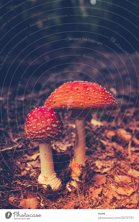 Herr Wenn und Frau Hätt Gesundheit Alternativmedizin Rauschmittel Ferien & Urlaub & Reisen Ausflug Abenteuer wandern Umwelt Natur Pflanze Herbst Klima Wald