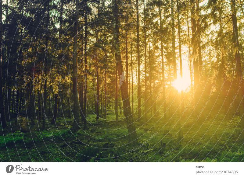 Lichtbündel Ferien & Urlaub & Reisen Natur Pflanze grün Landschaft ruhig Wald Gesundheit Umwelt Wege & Pfade Freiheit Ausflug wandern Abenteuer Sträucher Klima
