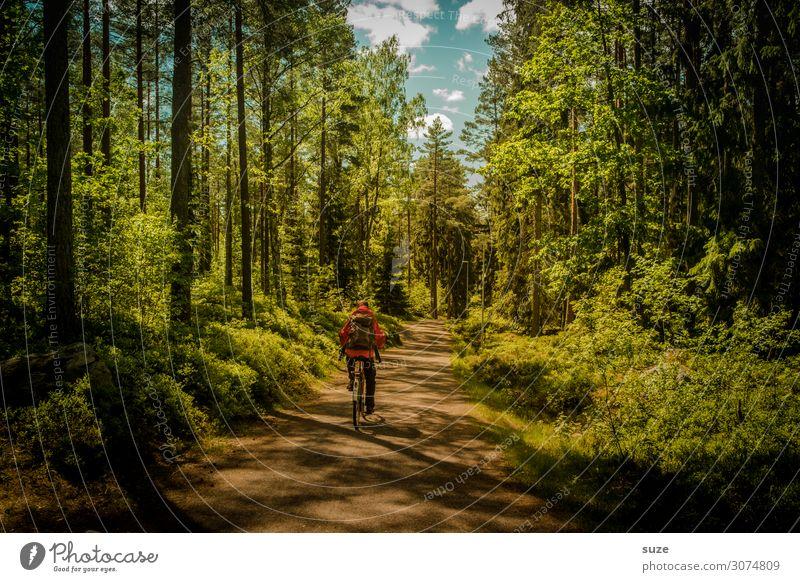 Waldradeln Ferien & Urlaub & Reisen Natur Mann Sommer Pflanze grün Landschaft ruhig Gesundheit Umwelt Wege & Pfade Freiheit Ausflug Abenteuer Fahrradfahren