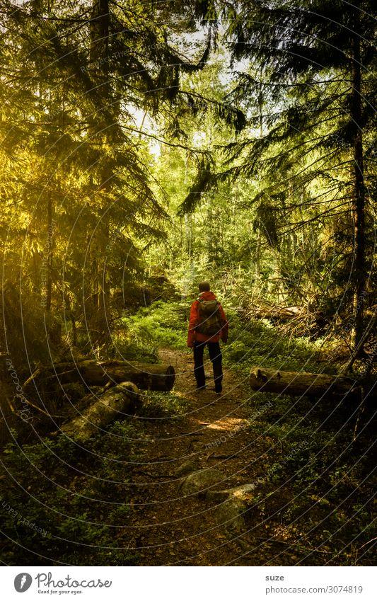 Der Wald gewährt das fremde Wesen Gesundheit Ferien & Urlaub & Reisen Abenteuer Freiheit Sommerurlaub wandern Mensch maskulin Mann Erwachsene Umwelt Natur