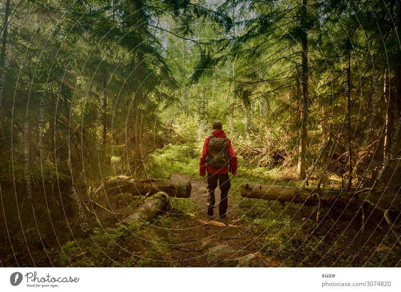 Vorläufer Mensch Ferien & Urlaub & Reisen Natur Mann Pflanze grün Landschaft Wald Gesundheit Erwachsene Umwelt Wege & Pfade Freiheit wild wandern maskulin