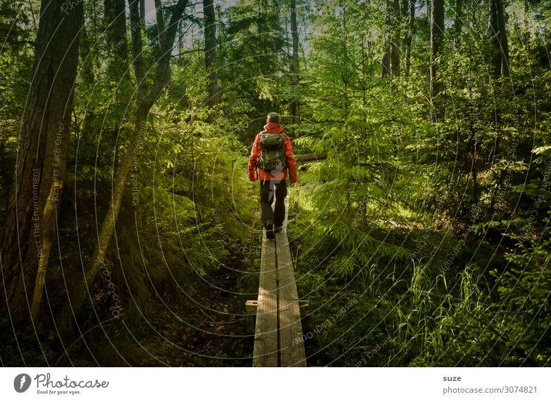 Draufgänger Mensch Ferien & Urlaub & Reisen Natur Pflanze grün Landschaft ruhig Wald Gesundheit Umwelt Wege & Pfade Freiheit Ausflug wandern Aktion Abenteuer