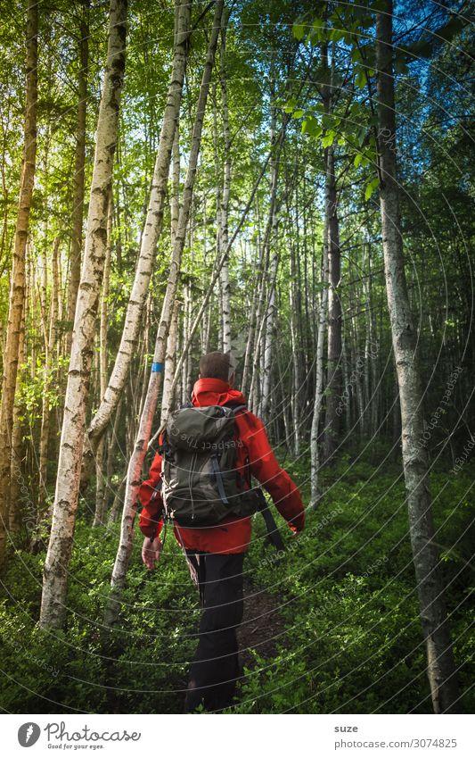 Aktiv im Birkenwald Gesundheit Ferien & Urlaub & Reisen Abenteuer Freiheit Sommerurlaub wandern Mensch maskulin Mann Erwachsene Umwelt Natur Landschaft Pflanze