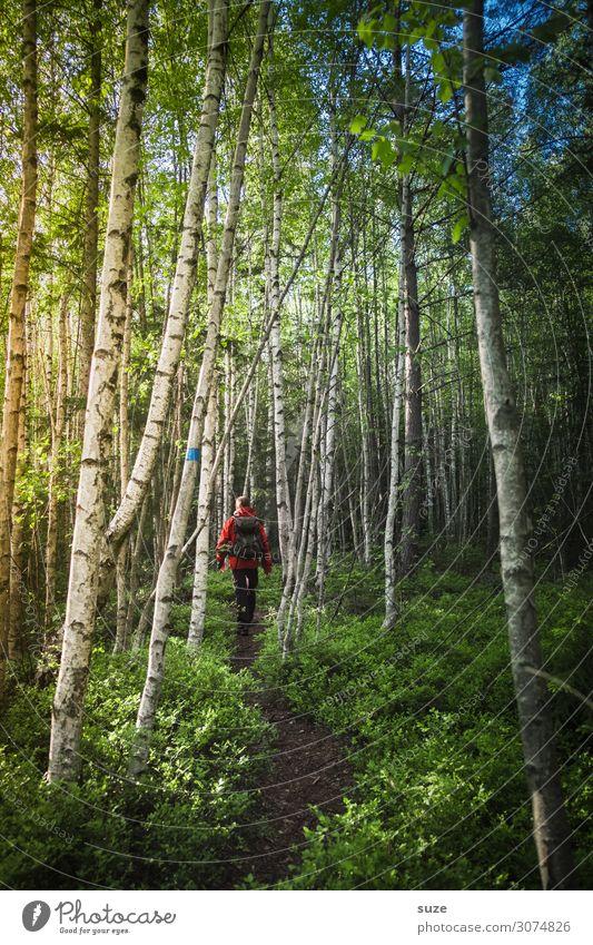 Zwischen Birken Gesundheit ruhig Ferien & Urlaub & Reisen Ausflug Abenteuer Freiheit wandern Mensch maskulin Erwachsene 30-45 Jahre Umwelt Natur Landschaft