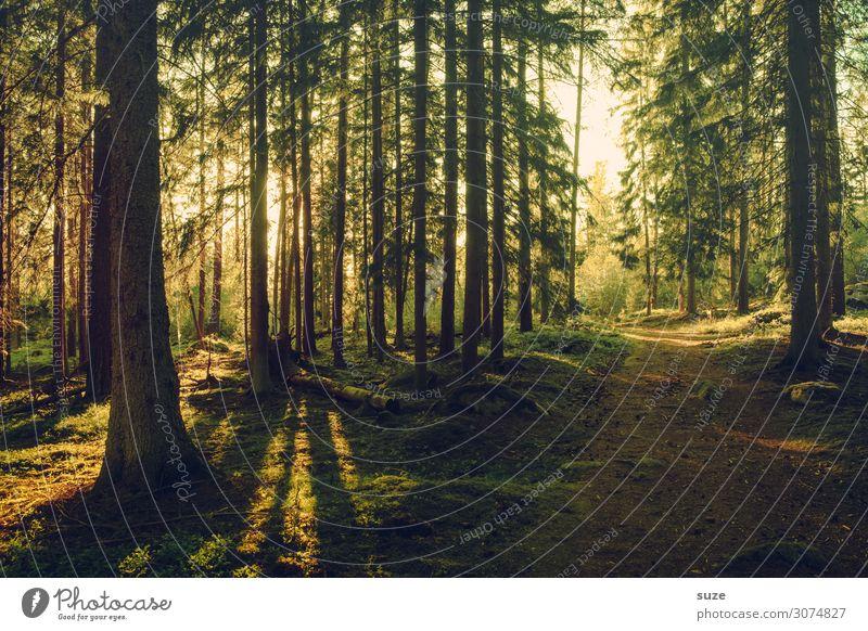 TT | Wertvoll - Wald Ferien & Urlaub & Reisen Natur Sommer Pflanze grün Landschaft ruhig Gesundheit Umwelt Wege & Pfade Freiheit Ausflug wandern Abenteuer Klima
