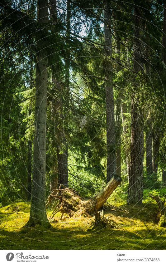Wurzelwerk Ferien & Urlaub & Reisen Natur Pflanze grün Landschaft ruhig Wald Gesundheit Umwelt natürlich Wiese Freiheit wandern Klima Baumstamm Skandinavien